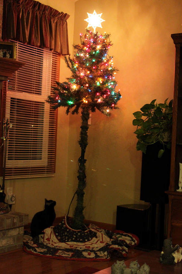 protecting-christmas-tree-from-dogs-cats-pets-5-585a660de18de_605.jpg