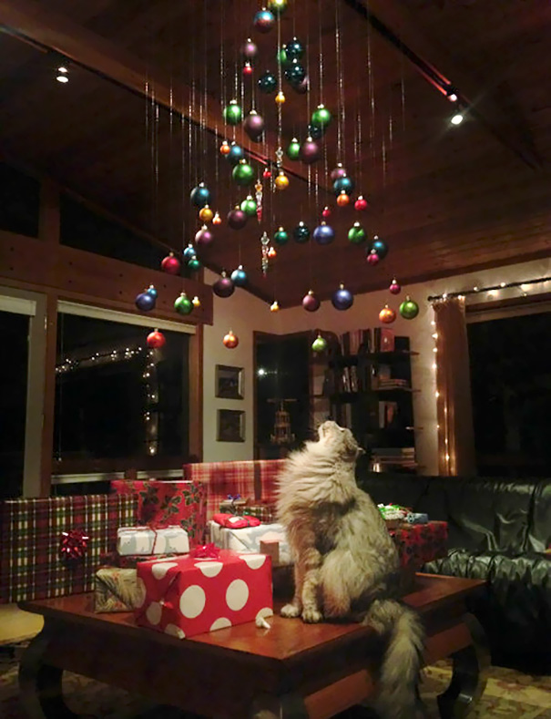 protecting-christmas-tree-from-dogs-cats-pets-8-585a69fda09e8_605.jpg