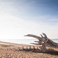 Óriási sárkánykoponya tűnt fel az angol tengerparton