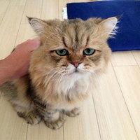 Csalódott tekintetű macska lehet az internet új sztárja
