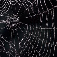Pókok a szeren