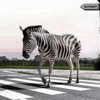 Különleges zebrák, kreatív gyalogosátkelők szerte a nagyvilágból