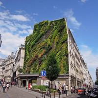 Burjánzó függőkert egy párizsi tűzfalon