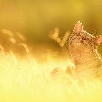 Boldog macskák, vidám pillanatok