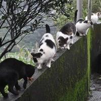 Houtong, a macskák Mekkája
