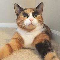 Macska trendi szemöldökkel