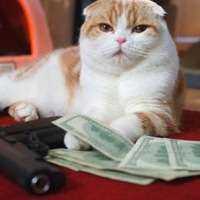 Macskák és bankók