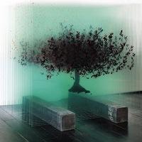 Üvegbe zárt fák