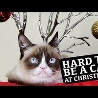 Nehéz macskának lenni karácsonykor...