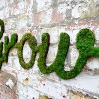 Környezetbarát graffitik mohából