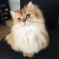 Ismerjétek meg Smoothie-t, a világ legfotogénebb macskáját!