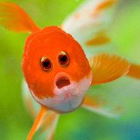 Így néznének ki az állatok, ha elöl lenne a szemük