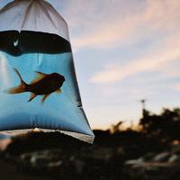 25 különleges akvárium