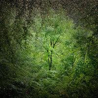Misztikus fotók egy elvarázsolt erdőből