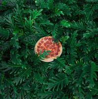 Pizza a szabadban
