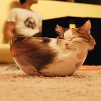 Macskák üvegben