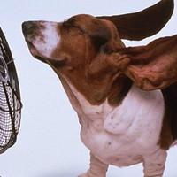 15 őrült ötlet a nyári hőség ellen