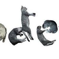 Írj macskákkal!