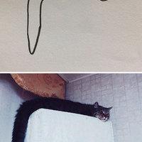 Fotórealista macskarajzok kicsit másképp