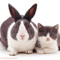 Állati harmónia