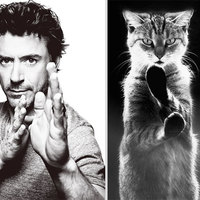 Pasik és macskák szinkronban