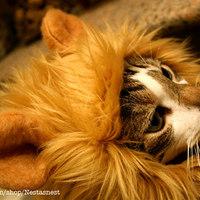 Sörénysapka macskáknak