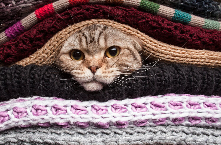 cozy-cat.jpg