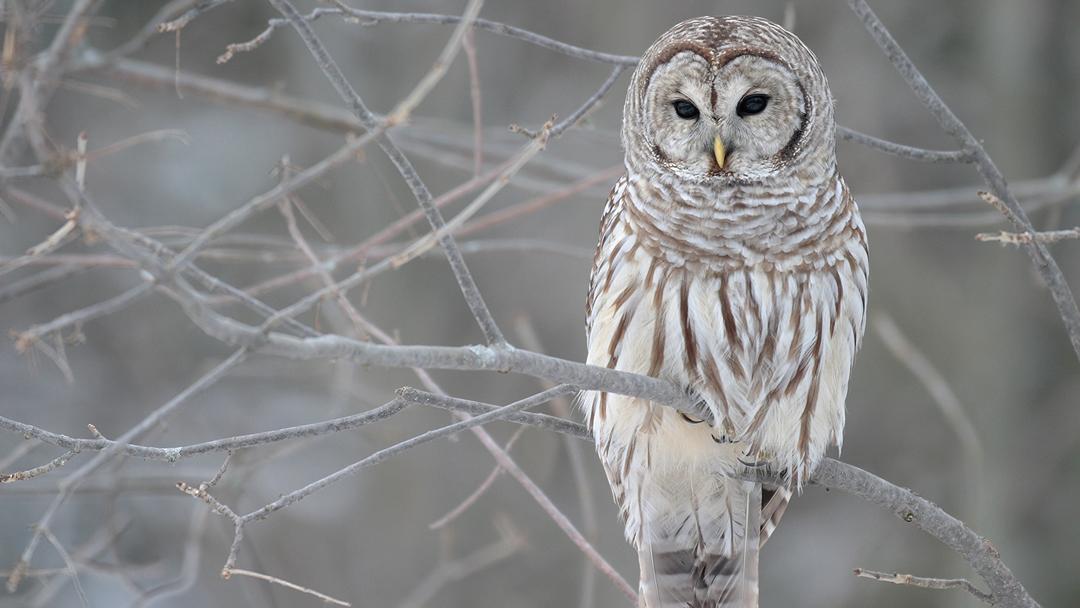 ft-owls-banner.jpg