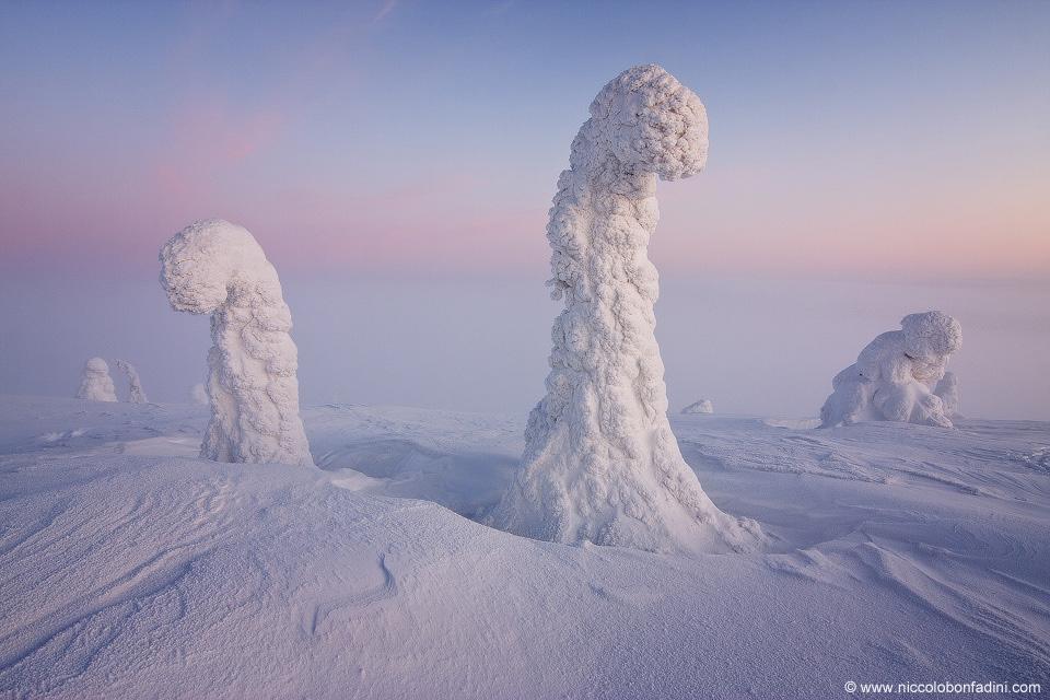 snowtrees_bonfadini_960.jpeg