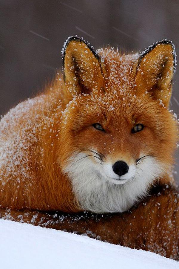 10-fox-pictures (1).jpg