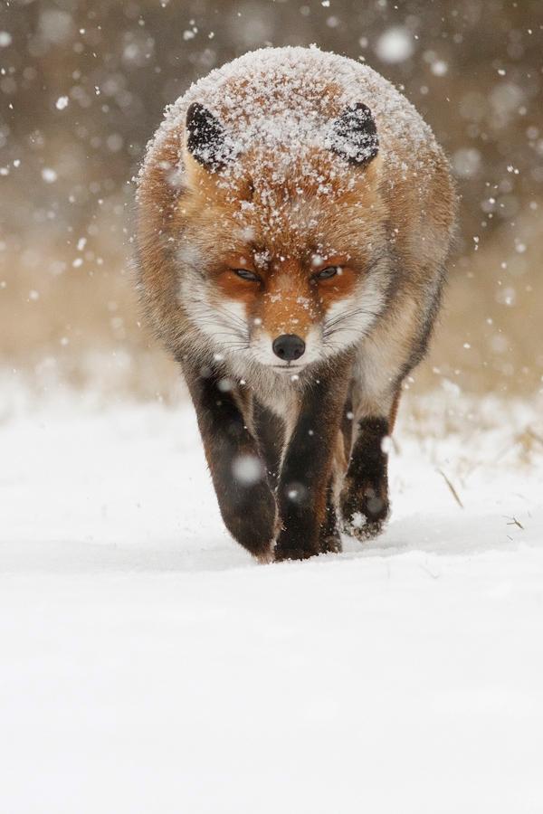 21-fox-pictures.jpg