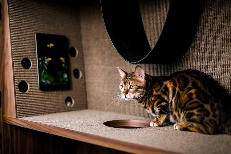 24storage-the-cat-flat-13.jpg