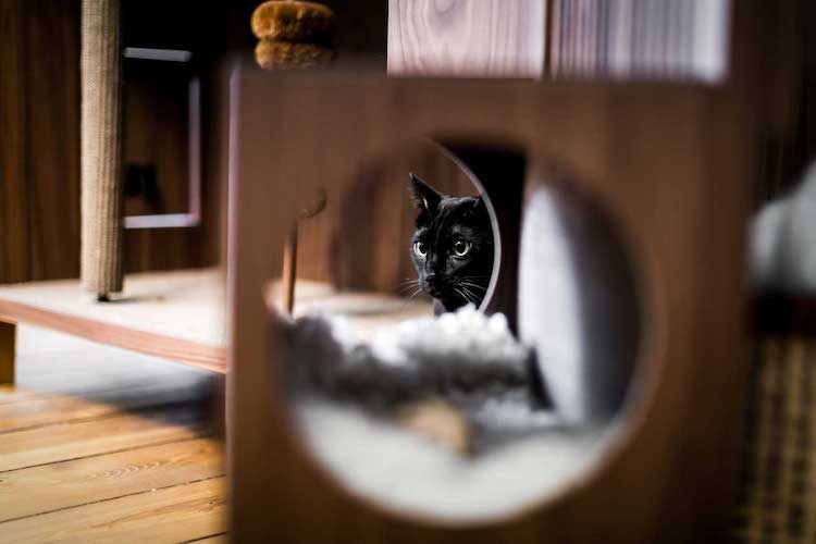 24storage-the-cat-flat-8.jpg
