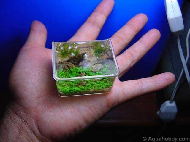 603_Palmtop_Aquarium_1c.jpg