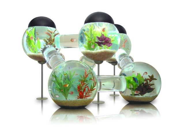 Labyrinth Aquarium0.jpg