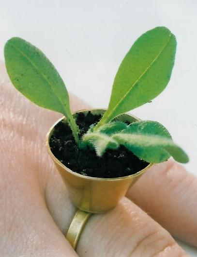 PlantRingcloseup.jpg