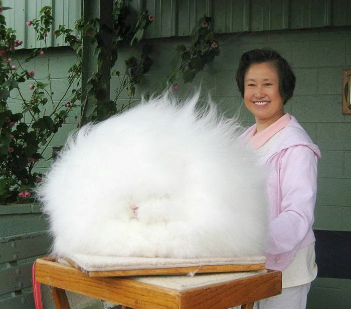 The most fluffy bunny in the world01.jpg