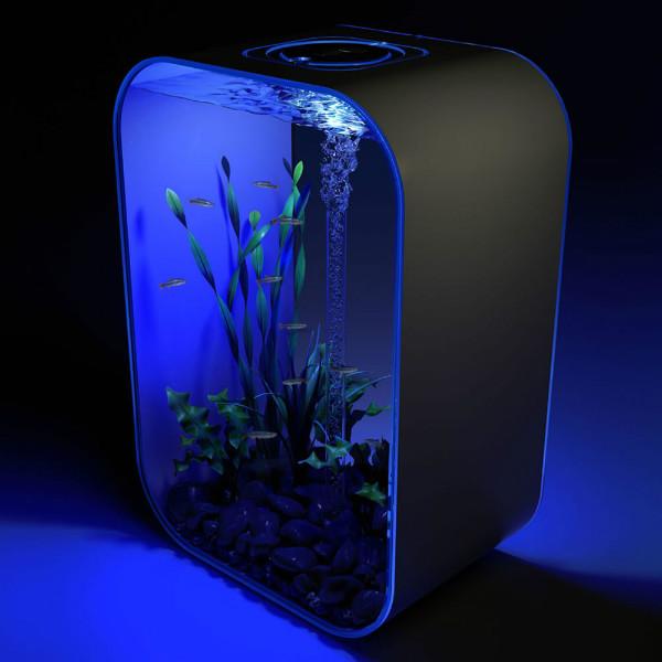The_24_Hour_Light_Cycle_Aquarium.jpg