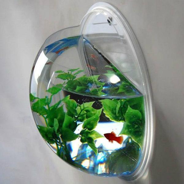 Wall_mounted_Fish_Bowl_Aquarium.jpg
