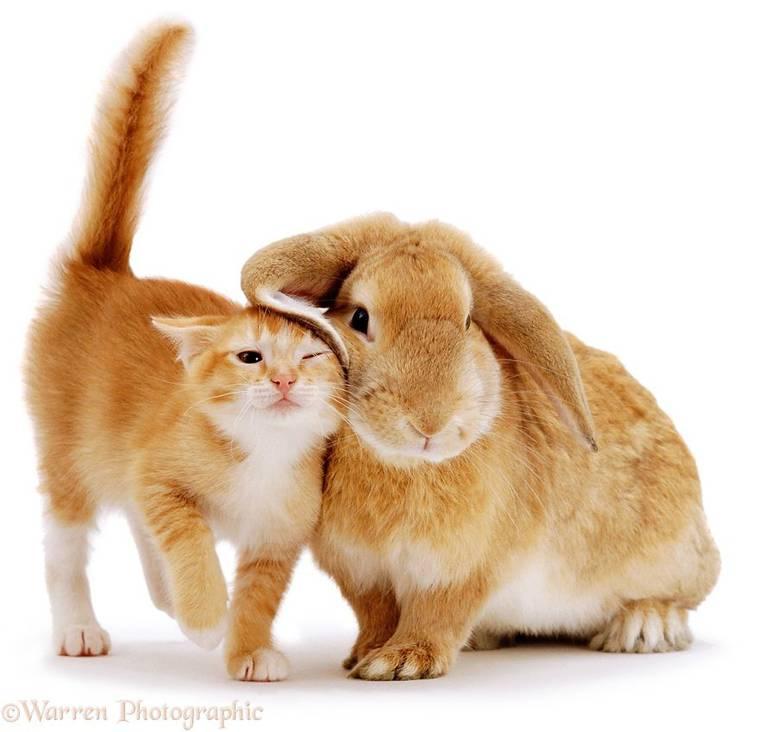 animal-pairing-1.jpg