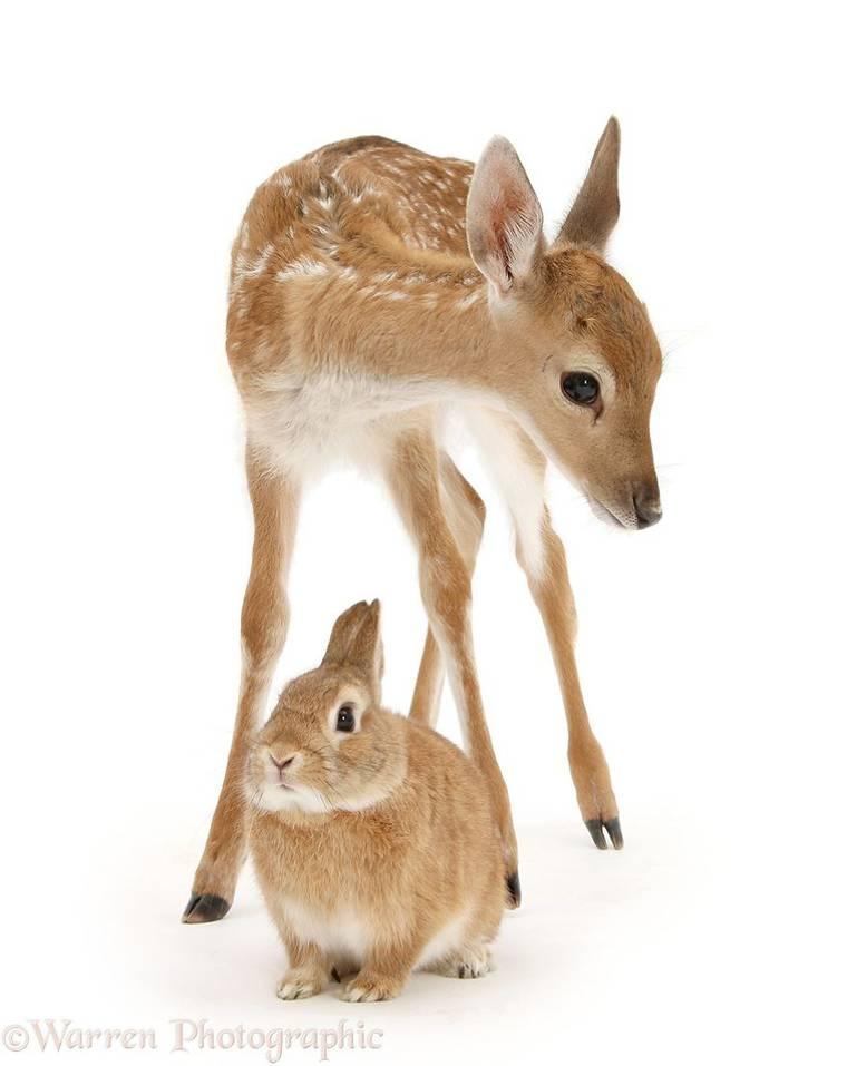 animal-pairing-11.jpg