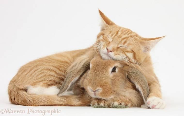 animal-pairing-13.jpg