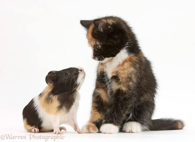 animal-pairing-14.jpg