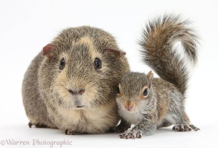 animal-pairing-15.jpg
