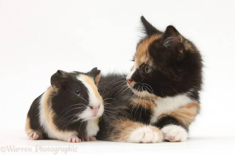animal-pairing-17.jpg