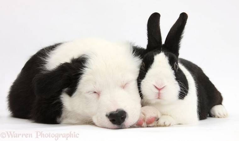 animal-pairing-18.jpg