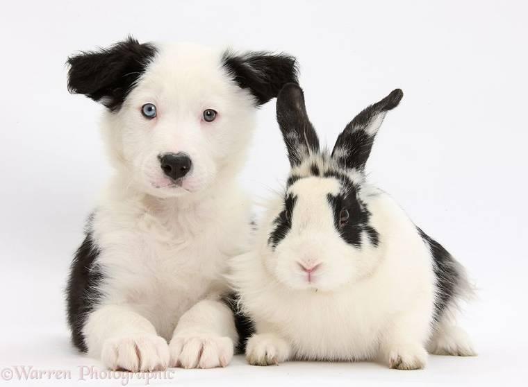 animal-pairing-19.jpg