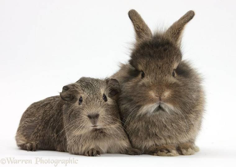 animal-pairing-20.jpg