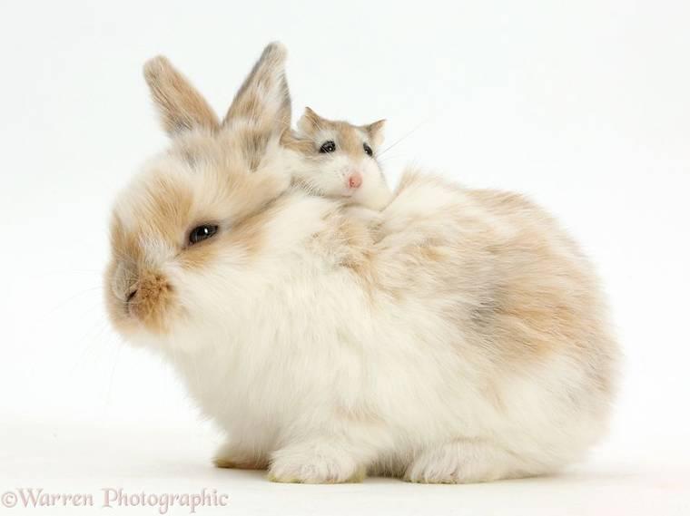animal-pairing-22.jpg