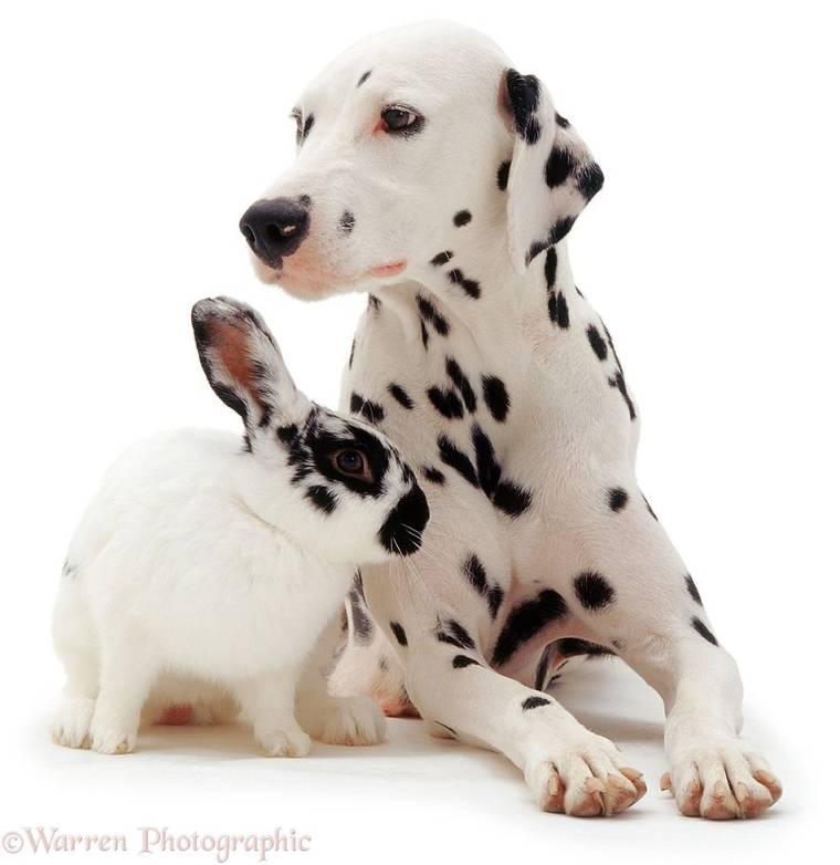 animal-pairing-3.jpg